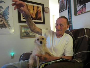 A man sitting in a chair, throwing a toy for the small brown dog on his lap.