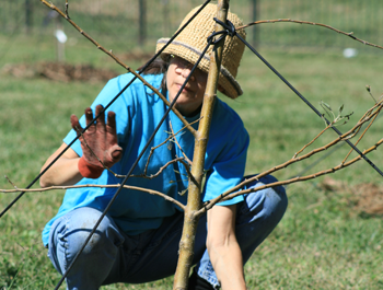 A woman wearing a blue shirt and red gloves plants a tree