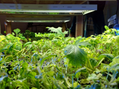 The Farmory: Indoor farm gives a downtown neighborhood a healthy boost
